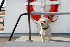 Leuke witte hond bij boot Royalty-vrije Stock Fotografie