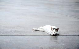 Leuke witte kat op de vloer royalty-vrije stock afbeeldingen