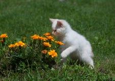 Leuke witte katje en bloemen stock foto