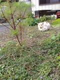 Leuke witte kattenslaap op grond Stock Foto