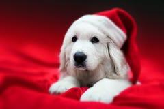 Leuke witte puppyhond in Chrstimas-hoed die in rood satijn liggen Stock Afbeelding