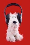 Leuke witte stuk speelgoed hond in hoofdtelefoons Royalty-vrije Stock Afbeelding