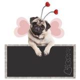 Leuke zoete pug puppyhond die met poten op bord promotiedieteken leunen, op witte achtergrond wordt geïsoleerd Stock Afbeeldingen