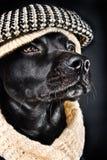 Leuke zwarte straathond royalty-vrije stock afbeeldingen