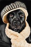 Leuke zwarte straathond stock afbeelding