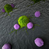 Leukocytes attacking a cancer cell Royalty Free Stock Photography