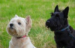 Leukst, bonnie honden in Schotland stock foto's