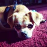 Leukste hond royalty-vrije stock afbeelding