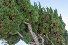 Leunende groene bomen met blauwe hemel Stock Afbeelding