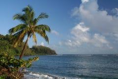 Leunende Palm Royalty-vrije Stock Afbeelding
