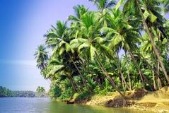 Leunende palmen Royalty-vrije Stock Foto's