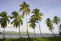 Leunende palmen bij het strand van Las Galeras, Samana-schiereiland Royalty-vrije Stock Foto's