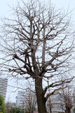 Leur arbre mort Photographie stock
