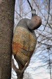 Leurre de canard pour la chasse Photographie stock
