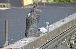 Leurre et pigeon d'oiseau Photo stock