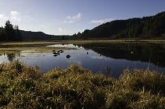 Leurres dans l'étang de canard Photos stock