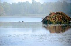 Leurres et abat-jour de canard dans le brouillard Photos libres de droits