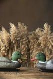 Leurres et sifflements de canard Image stock