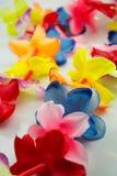 Leus havaianos coloridos do close-up com as flores brilhantes no fundo branco Fotografia de Stock