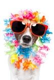 Leus hawaianos y gafas de sol del perro divertido imágenes de archivo libres de regalías