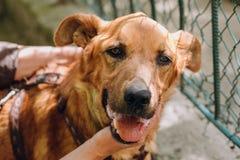 Leute übergeben Liebkosung braunen alten Hund in der Stadtstraße, süße Gefühle stockfotografie