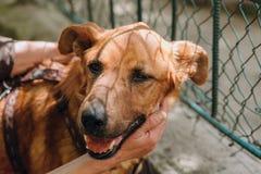 Leute übergeben Liebkosung braunen alten Hund in der Stadtstraße, süße Gefühle stockfoto
