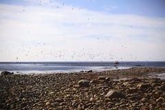 Leute auf dem Boot die Kolonie von Seeschwalben aufpassend lizenzfreies stockbild