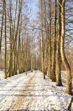Leute auf dem Winterweg Lizenzfreie Stockfotos