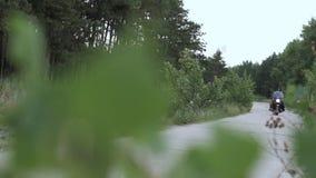 Leute auf Motorradreiten auf der Straße nahe Wald in der Zeitlupe stock video
