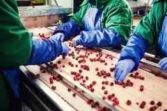 Leute bei der Arbeit Unerkennbare Arbeitskrafthände in schützendem Blau g Stockbild