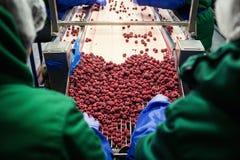 Leute bei der Arbeit Unerkennbare Arbeitskrafthände in schützendem Blau g Stockfoto