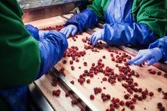 Leute bei der Arbeit Unerkennbare Arbeitskrafthände in schützendem Blau g Lizenzfreies Stockbild