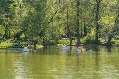 Leute-Boots-Fahrt auf Carol Public Park Lake On-Frühlings-Tag Stockbilder