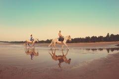 Leute in der Liebe am Sonnenuntergang im Meer lizenzfreies stockbild
