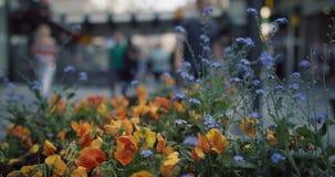 Leute in der Stadt gehend hinter bunte Blumen stock video footage