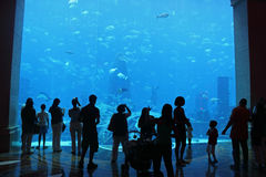 Leute, die Aquariumfische genießen Lizenzfreies Stockfoto