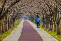 Leute, die auf dem Weg unter Kirschblütentunnel an Gimhae-Stadt von Südkorea radfahren stockfotos
