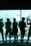 Leute, die Delphine in einem Unterwasserbetrachtungsbereich fotografieren Lizenzfreies Stockfoto