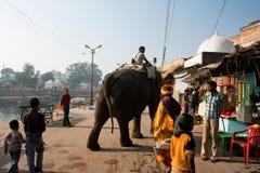Leute, die den Elefanten auf der sonnigen Straße aufpassen lizenzfreies stockbild