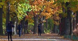 Leute, die einen Spaziergang machen und in Herastrau-Park auf Autumn Day trainieren stock video footage
