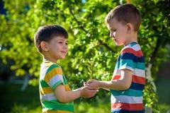 Leute, die Jungpflanze in den Händen gegen grünen Frühlingshintergrund halten Tag der Erde-Ökologie-Feiertagskonzept stockfotografie
