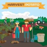 Leute, die Kartoffel auf einem Gebiet im Dorf ernten vektor abbildung