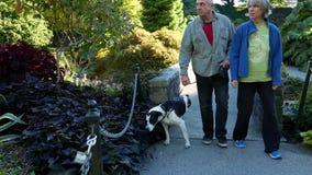 Leute, die mit Hund an der Königin Elizabeth Park besichtigen und gehen stock video