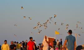Leute, die mit Seemöwenvögeln auf Strand spielen stockfotografie