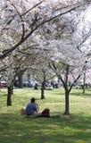 Leute, die unter Blütenbäumen sich entspannen Stockfotografie