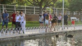 Leute in einem allgemeinen Park durch die Fütterung von Enten und von Schwänen stock footage