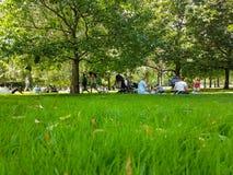 Leute einschließlich die Familiengruppen gesetzt auf Gras und Weg Stockfotografie