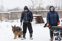 Leute gehen ihre Hunde im Winter stockfotografie