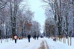 Leute gehen in Winterpark mit vielen großen Bäumen und Weg Lizenzfreie Stockfotos