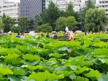 Leute genießen, Foto in Lotosteich in Ueno-Park zu machen Lizenzfreie Stockfotos